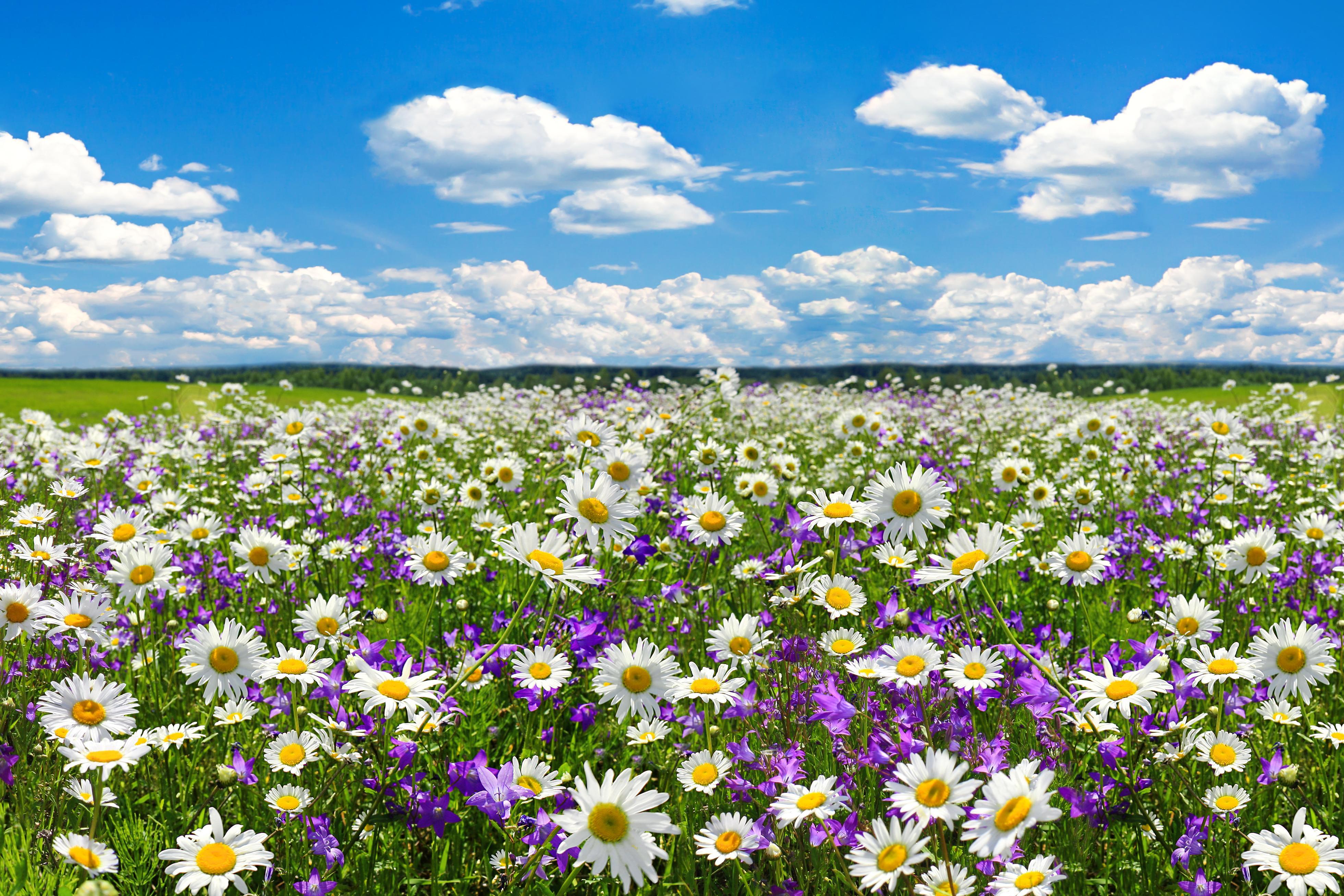 wilde bloemen voor de bijen, hommels en vlinders