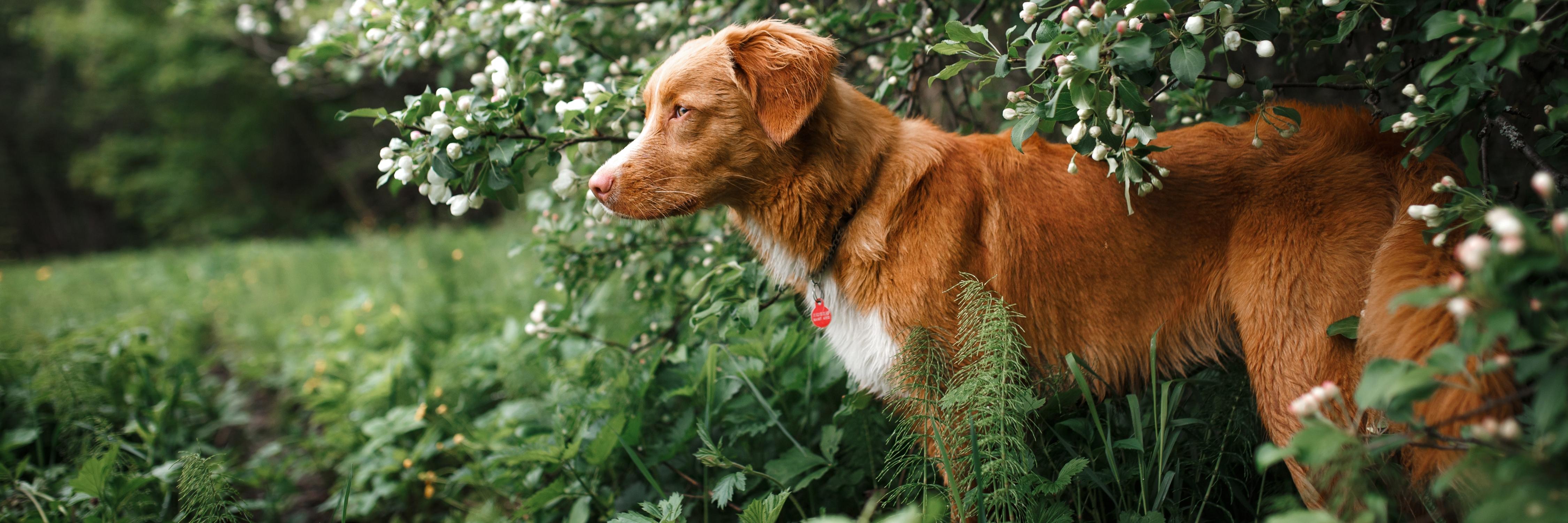 Hond in het struikgewas