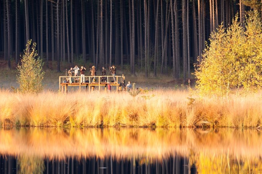 Trektelpost in Averbode Bos en Heide