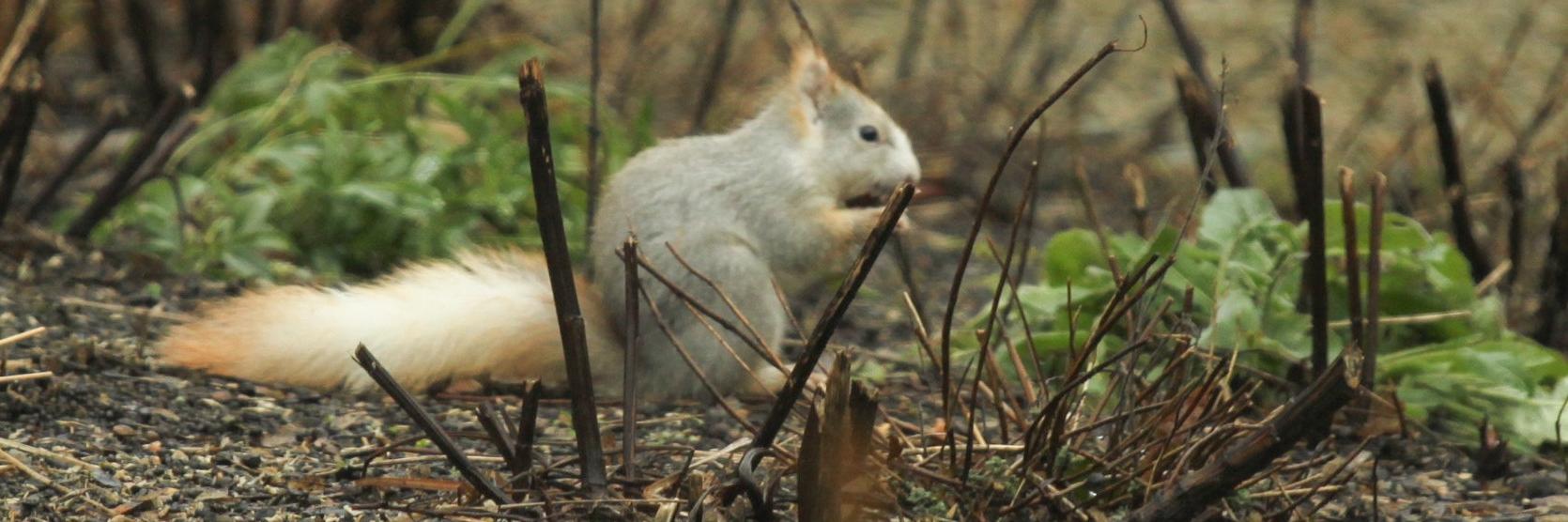 Witte eekhoorn in Bazel - Magda Wouman