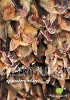 Vleermuizen op zolders