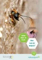 Wilde bijen in nood. Hoe kan jij helpen?