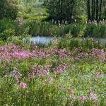 Damvallei