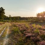 Averbode Bos en Heide