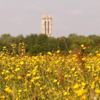 Wandeling van het Jaar 2015 - Mechels Broek